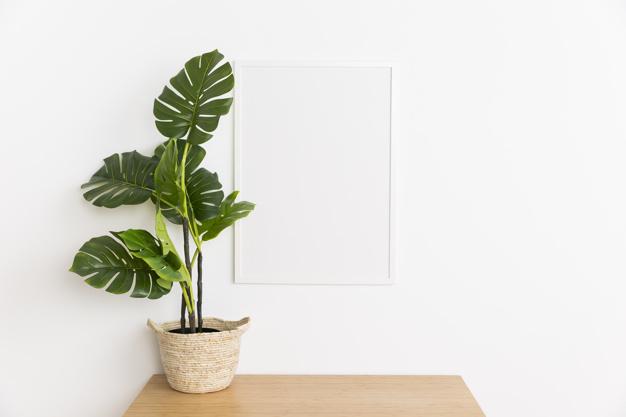 plante til kontor